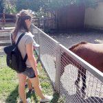 Návštěva u koní