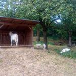 Výlet za kozou
